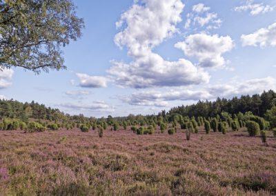 Ellerndorfer Heide